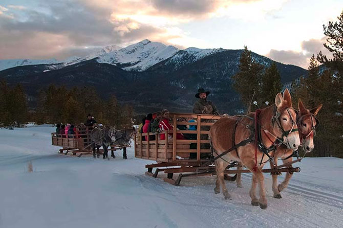 Mules pull sled in the snow at Two Below Zero Sleigh Rides in Summit County, Colorado