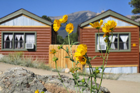 Flowers in front of cabins at Arrowhead Point Campground Cabins and RV Park cabins near Buena Vista, Colorado