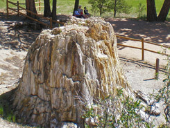 florissant fossil beds, Pikes Peak Area, CO, Colorado Vacation Directory