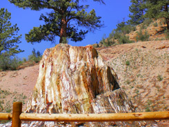 florissant fossil beds, CO, Colorado Vacation Directory