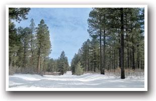 Dolores Snowmobile Trails Map | Colorado Vacation Directory