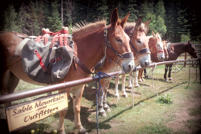 Horses lined up and ready to ride at Sable Mountain Outfitters in Meeker, Colorado